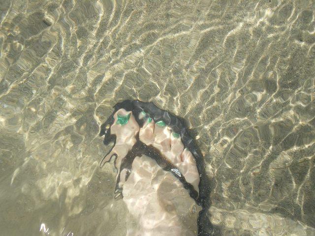 海水の透明度の証明