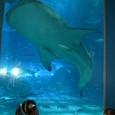 ジンベイザメを見ながら